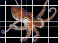 grid octopus